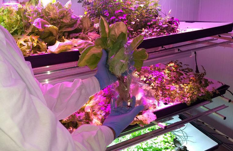 Pesquisa desenvolve modelos para produção de hortaliças em fazendas verticais