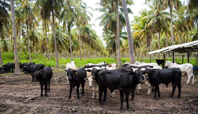 Alagoas é palco de debates sobre Integração Lavoura Pecuária – Floresta