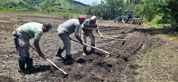 Tradição nordestina de plantar milho no Dia de São José foi registrada por reportagem especial