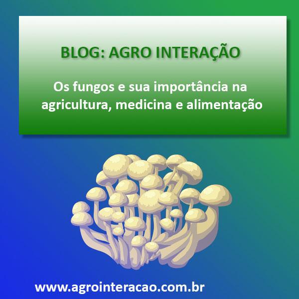 Os fungos e sua importância na agricultura, medicina e alimentação