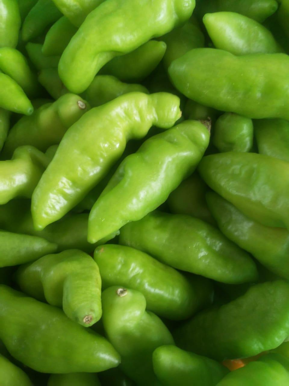 Agro culinária – Receita de molho de pimenta de cheiro (muito bom!)