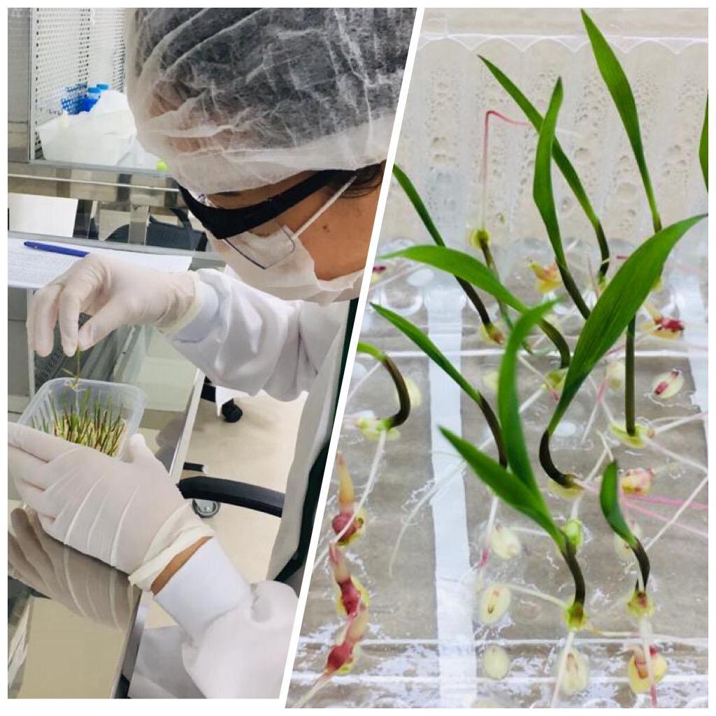 Pesquisa irá criar biodefensivos de uso tópico para controle de plantas daninhas, insetos-praga e doenças para as principais culturas agrícolas