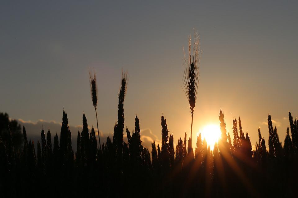O sol e as plantas