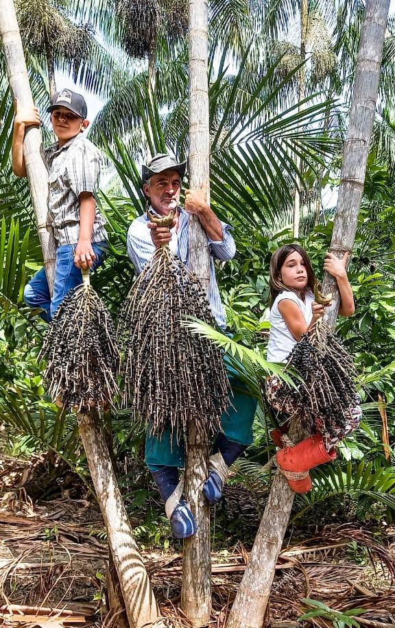 Preservar a floresta pode ser doce e lucrativo