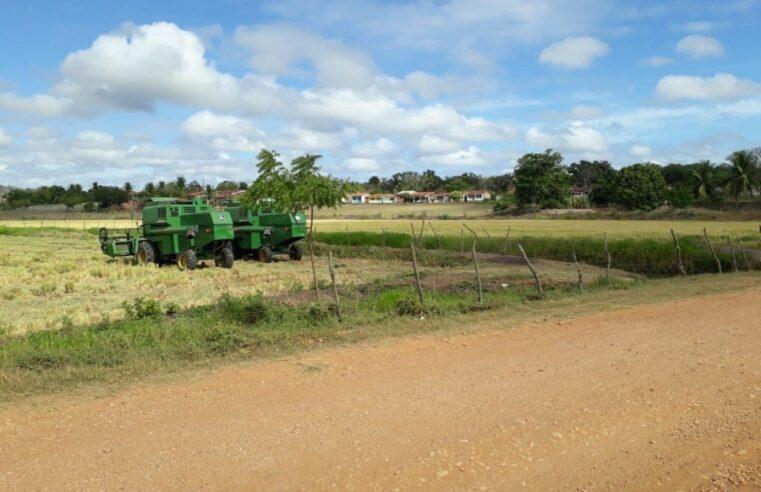 Próxima safra de arroz tem projeção de quase 20 mil toneladas