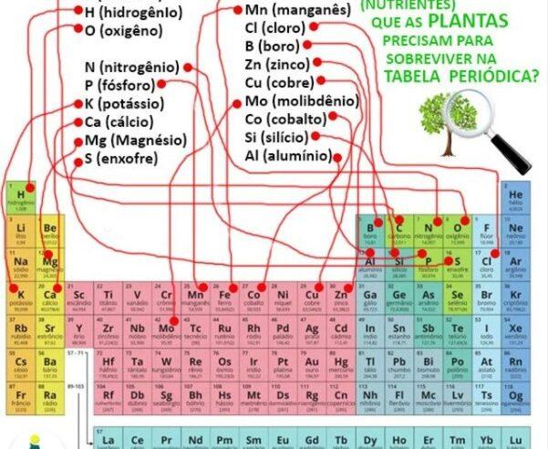 Tabela periódica e os nutrientes que as plantas precisam