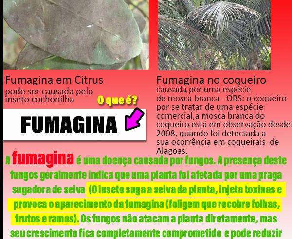O que é a Fumagina?